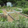 Edible garden in June