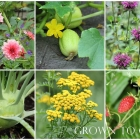 Edible garden in August