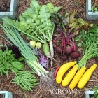 Edible Garden in September