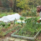 Edible garden in November