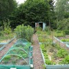 Season 2014 in the vegetable garden