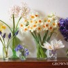 Seasonal bouquet - spring bulbs