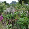 Plant functions in the permaculture garden - video