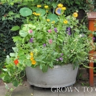Edible flowers, how to grow them and how to eat them
