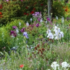 Giverny: the painter's garden