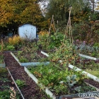 Edible garden in September & October 2015