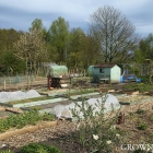 Edible garden in April 2016