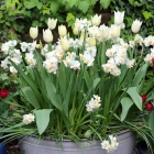 How to plant a bulb lasagne in a container - video