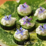 Cucumber and borage canapés
