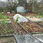 allotment in december